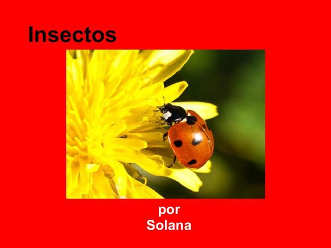 Solana insectos