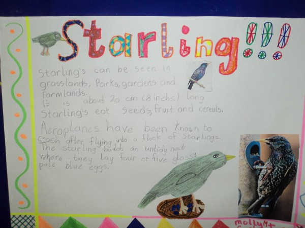 Birds of Ireland by 3rd class