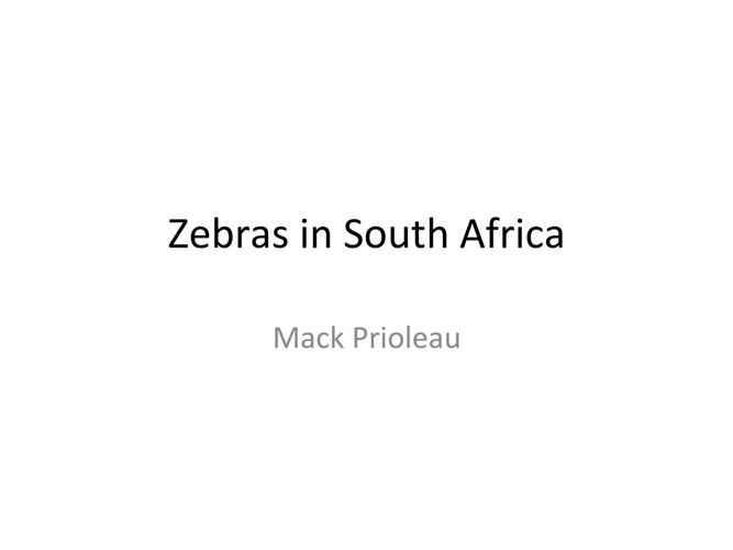 South Africa Zebra Pictures - Mack Prioleau