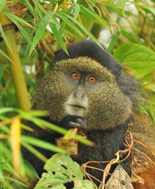 andBeyond Discover Uganda and Rwanda Brochure