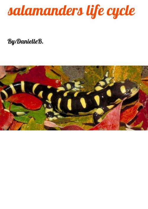 salamanders life cycle