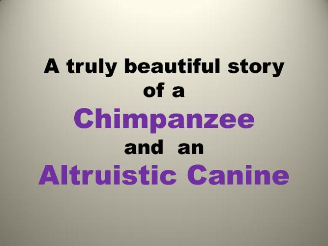 Cute Chimp- Altruistic Dog