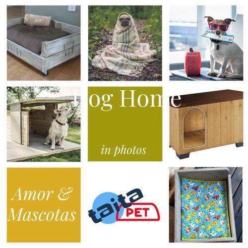 Mascotas casas