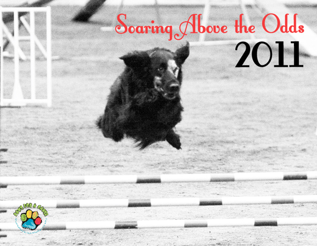 Soaring Above the Odds 2011