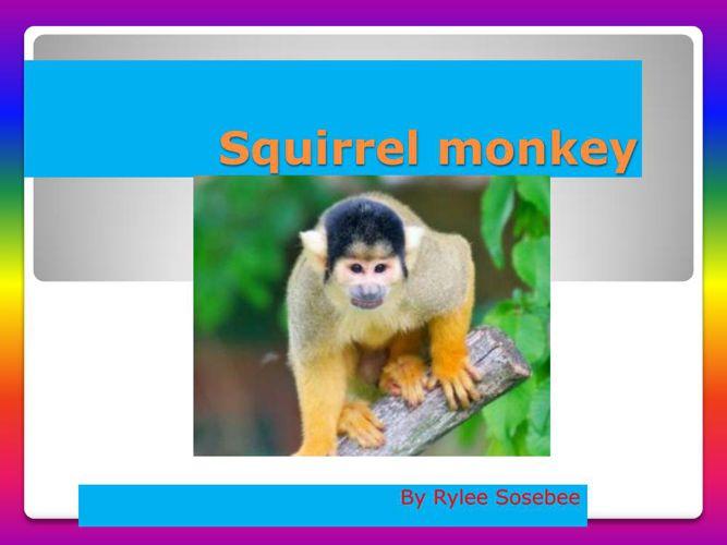 Squirrel monkey-Rylee Sosebee
