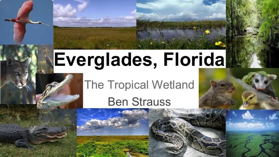 Everglades Powerpoint (2)
