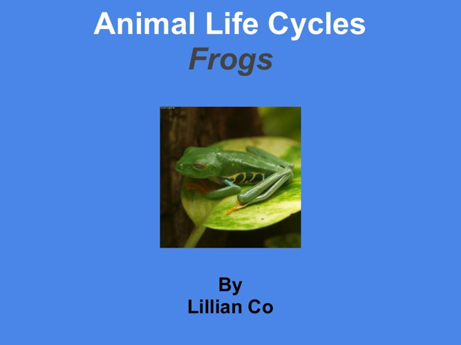 Lillian frog