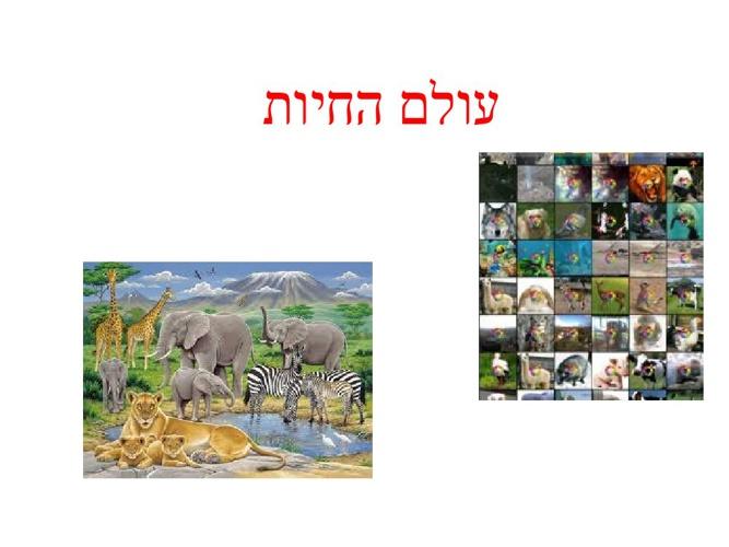 עולם החיות