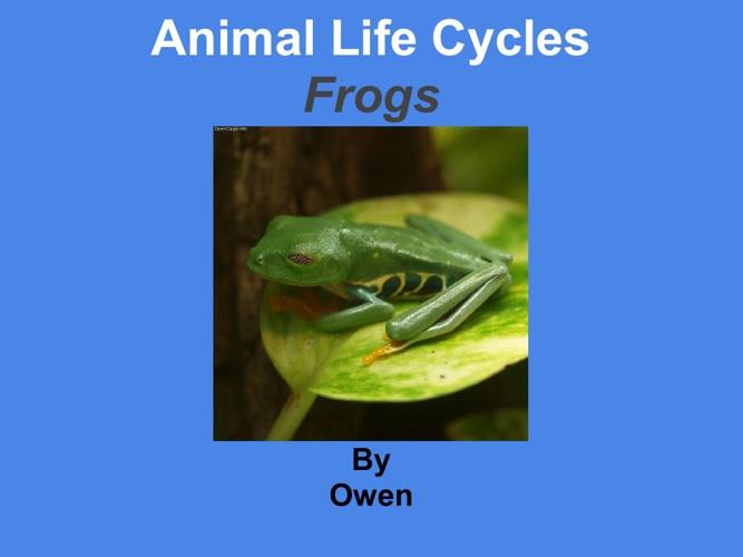 owen frogs