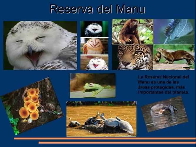 Reserva de Manu
