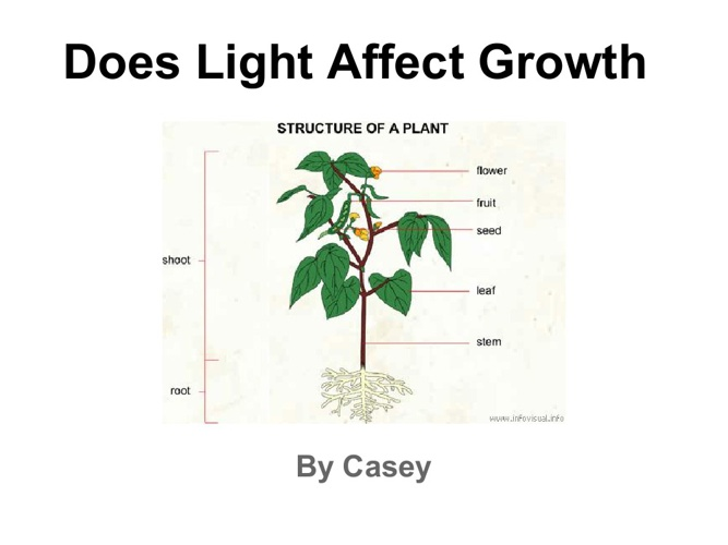 Casey plant