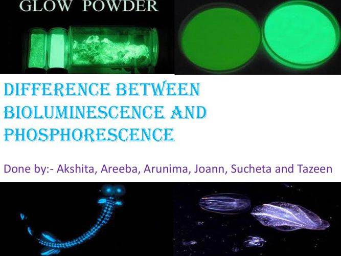 DIFFERENCE BETWEEN BIOLUMINESCENCE AND Phosphorescence