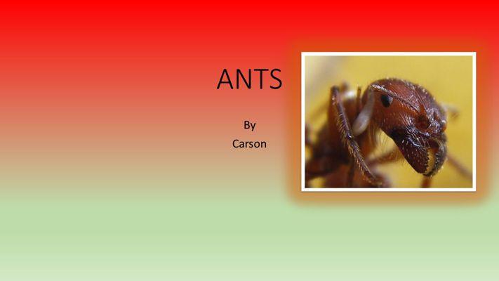 Carson Ants