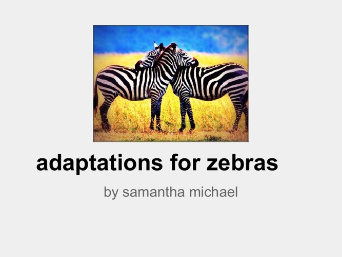 zebra adaptations