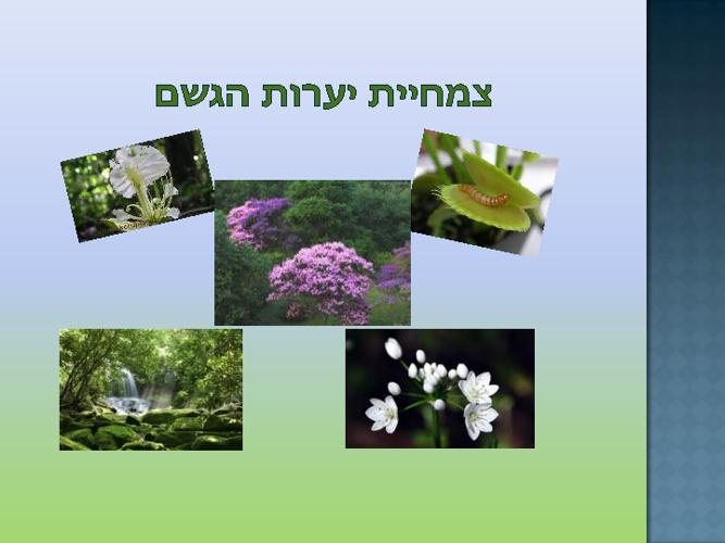 הצומח ביערות הגשם