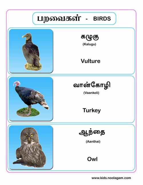 bird4_