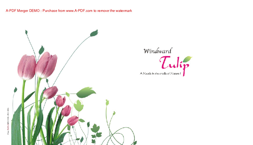 WindWard Tulip