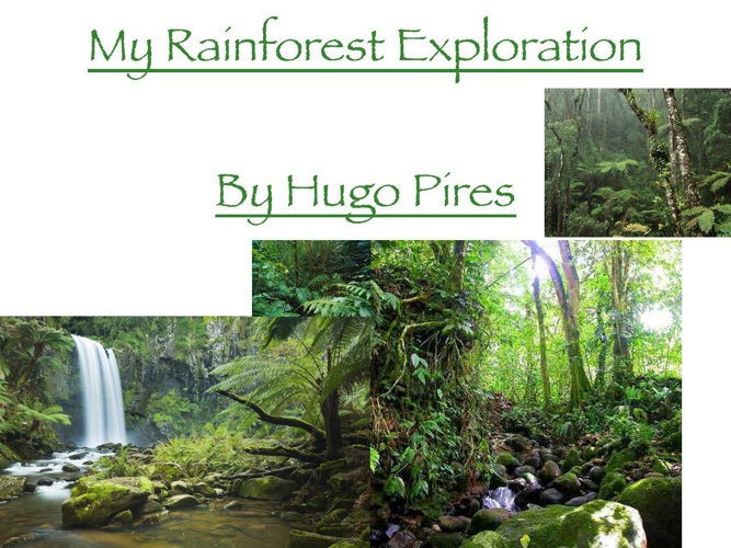 My Rainforest eploration-1