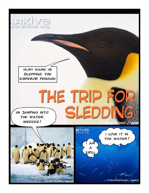 The Trip for Sledding by Sydney