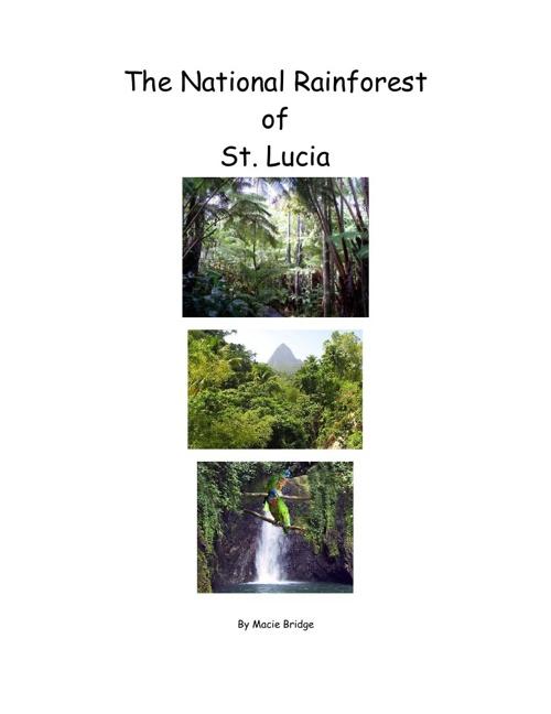 National Rainforest of St.Lucia