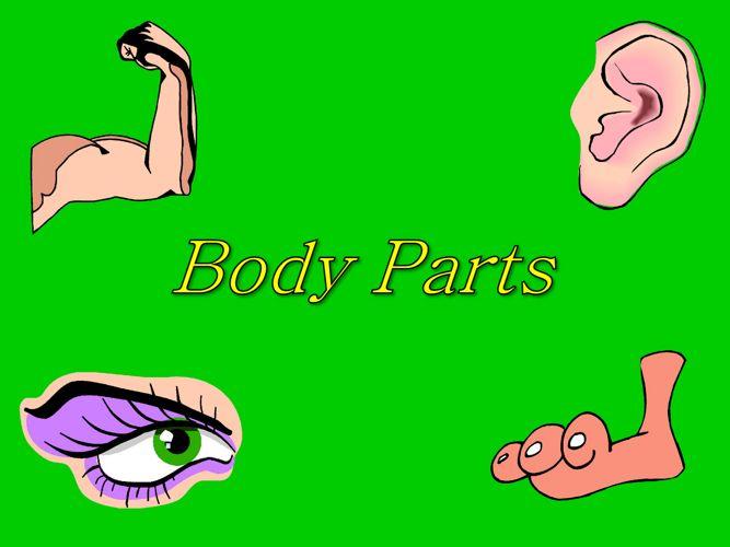 bodypartspowerpoint-100810073859-phpapp02