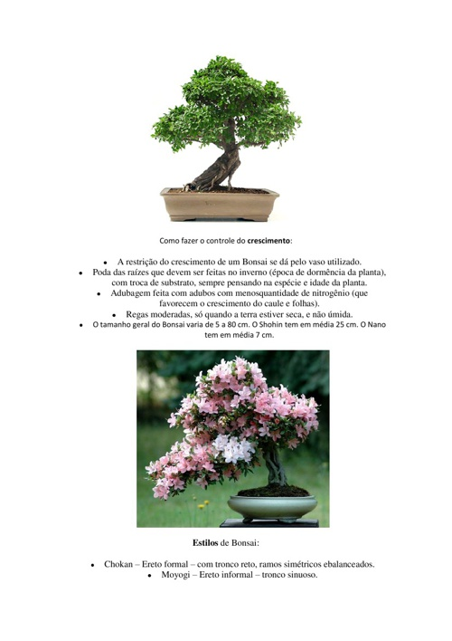 Resumo so bre bonsai