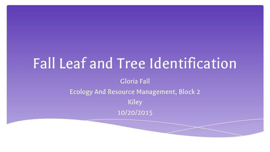 Gloria Fall, Fall Leaf Collection Flip Book