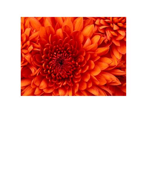 azu flor