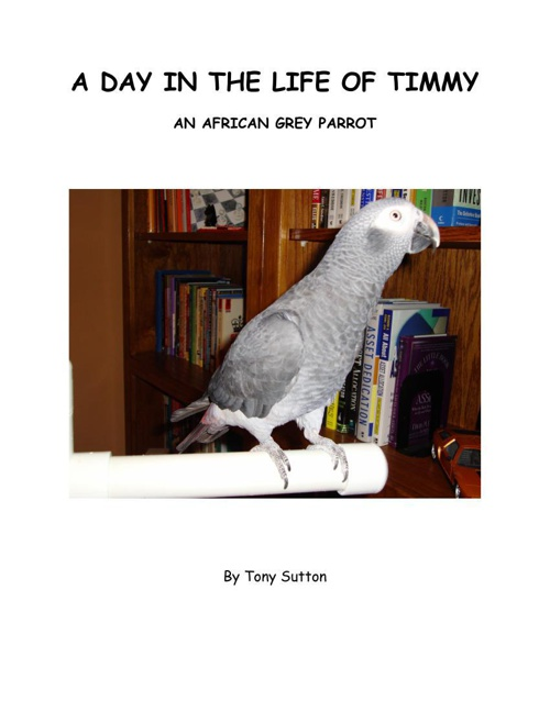 A DAY IN THE LIFE OF TIMMY blue comic script3