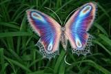 My butterfly story