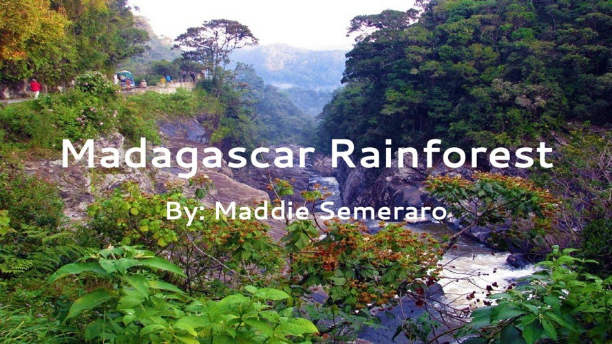 Madagascar Rainforest-Maddie Semeraro