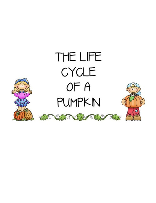 Life Cycle of A Pumpkin