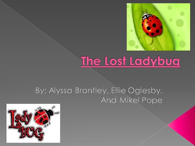 The Lost Ladybug