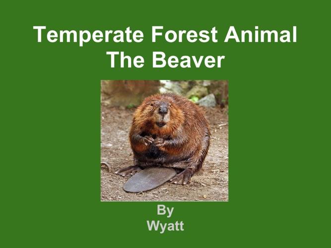 Wyatt beaver