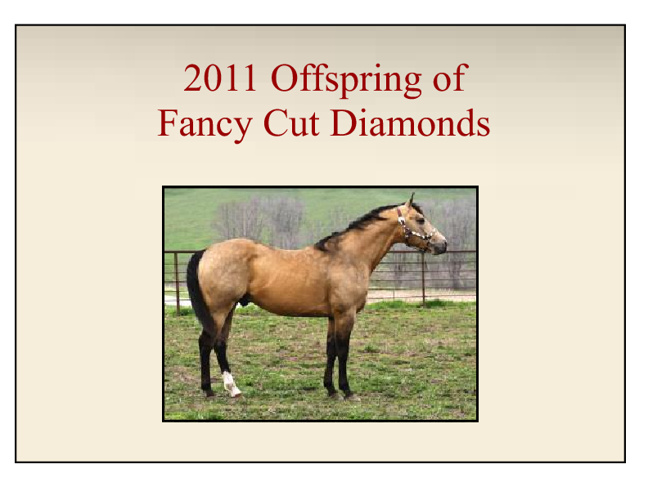 2011 Quarter Horse Foals by Fancy Cut Diamonds