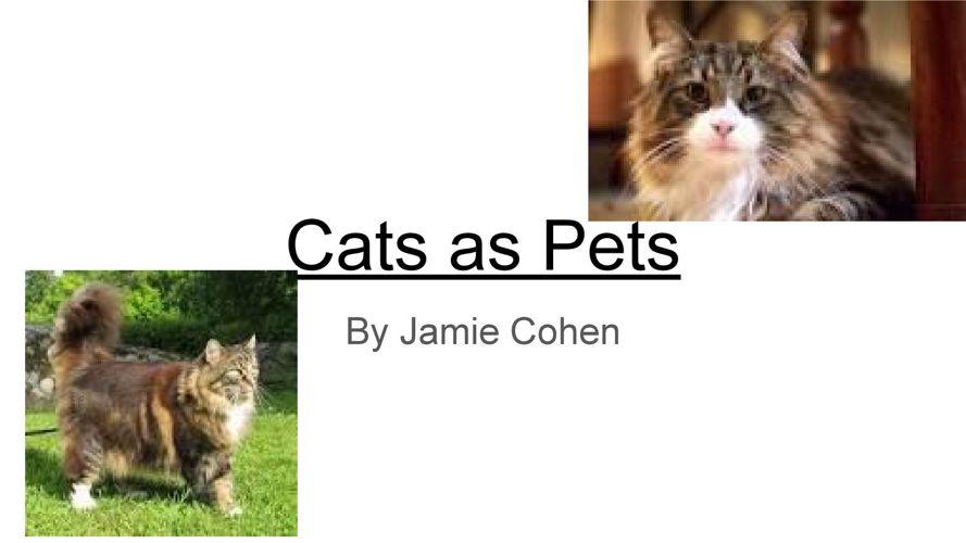 Cats - Jamie
