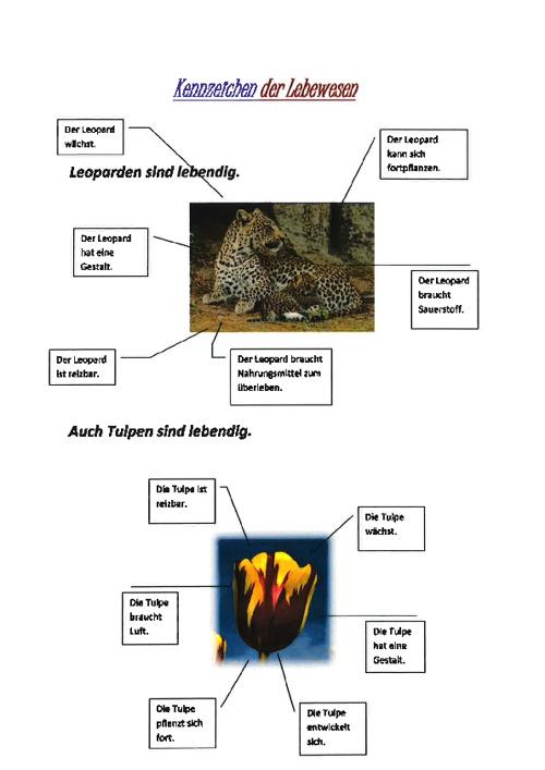 Gestaltungsauftrag Biologie der 1. Sek. Künten