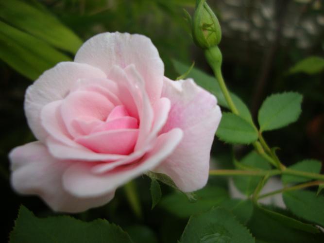 ดอกไม้งาม