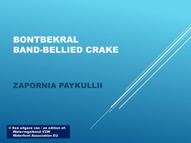 Bondbekral - Band-Bellied crake