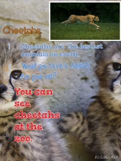Espen's Cheetah report