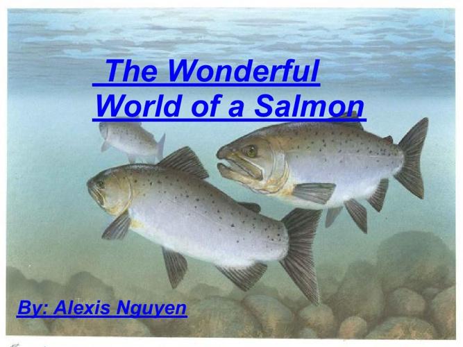 The Wonderful World of Salmon