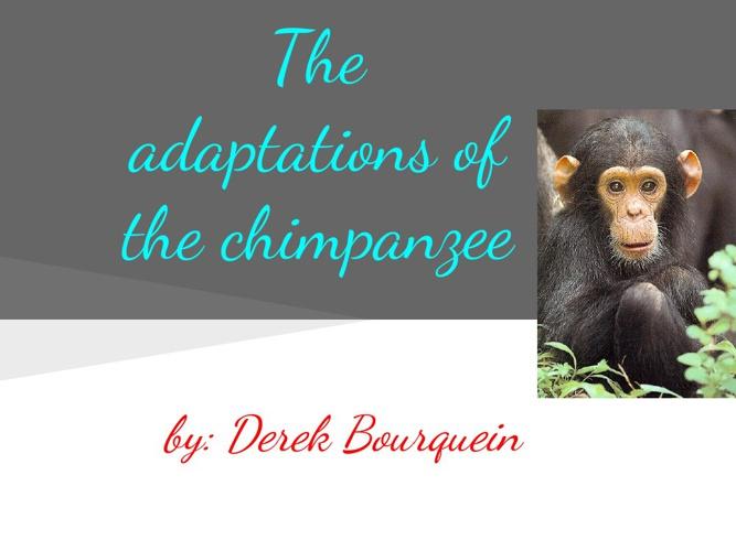 The Adaptation of the Chimpanzee