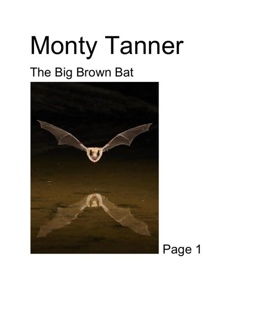 The big brown bat Monty tanner 2.0