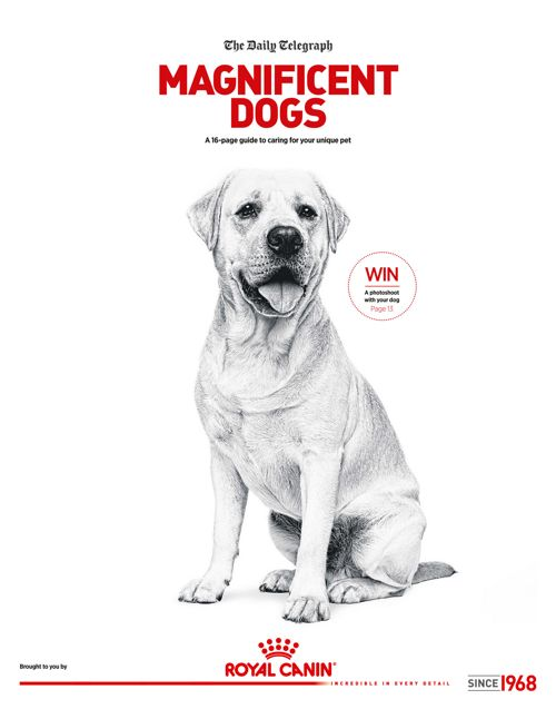 Magnigicent Dogs - Royal Canin 04/03/2017