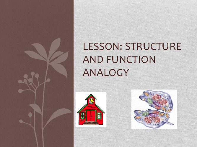 Structure and Function Analogy