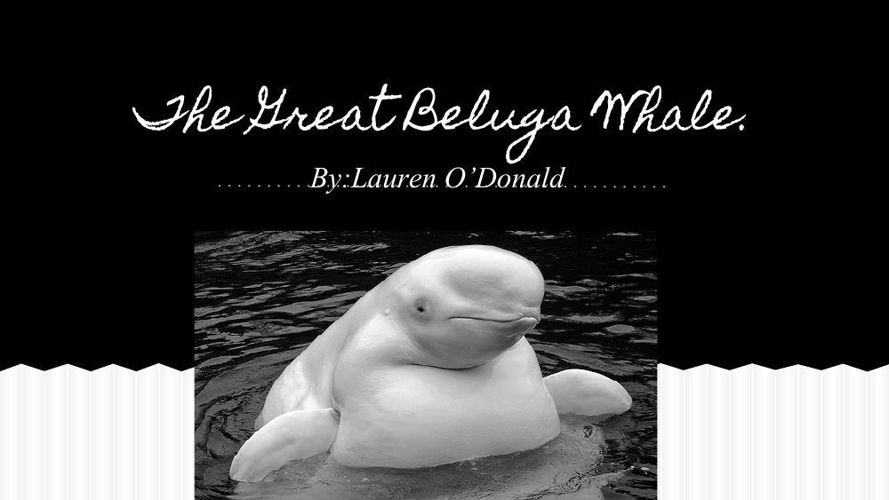 Copy of The Great Beluga Whale (2)