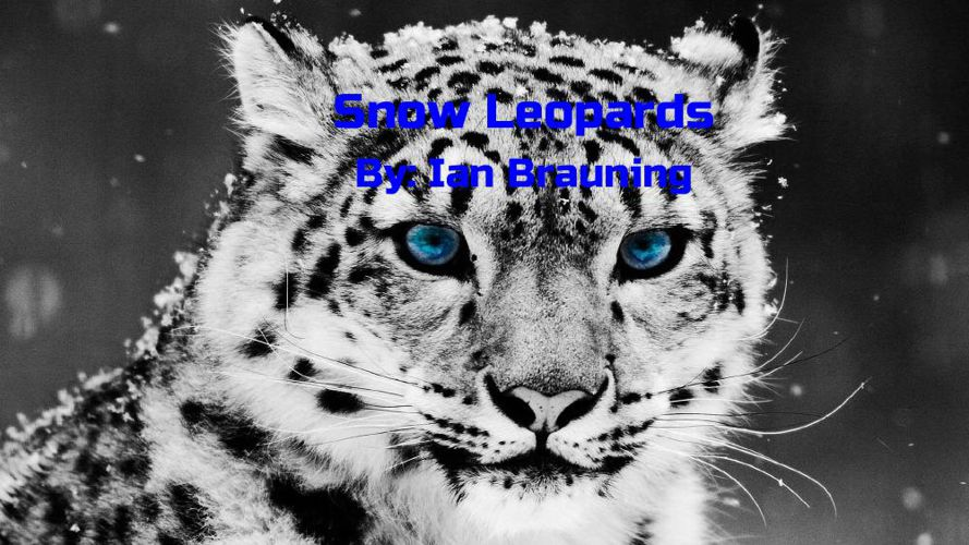 Snow Leopard Writing Project