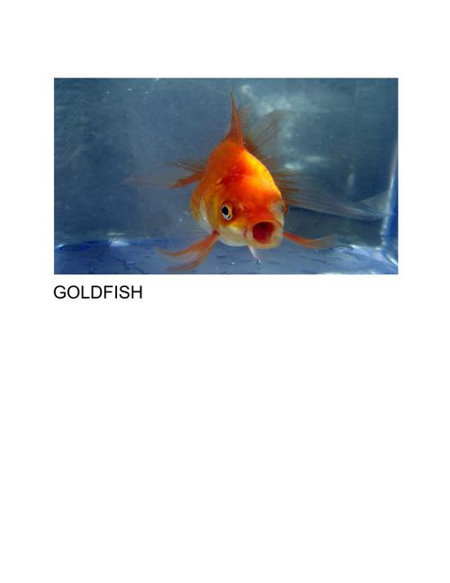 goldfishbook (1)