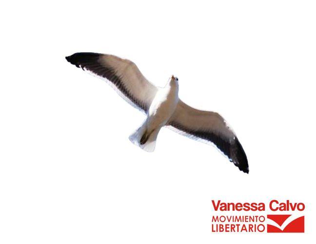 Plan de gobierno Vanessa Calvo 2016 - 2020