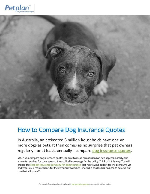 How to Compare Dog Insurance Quotes